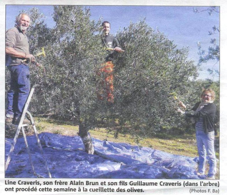 article VM Olives 15 - 3