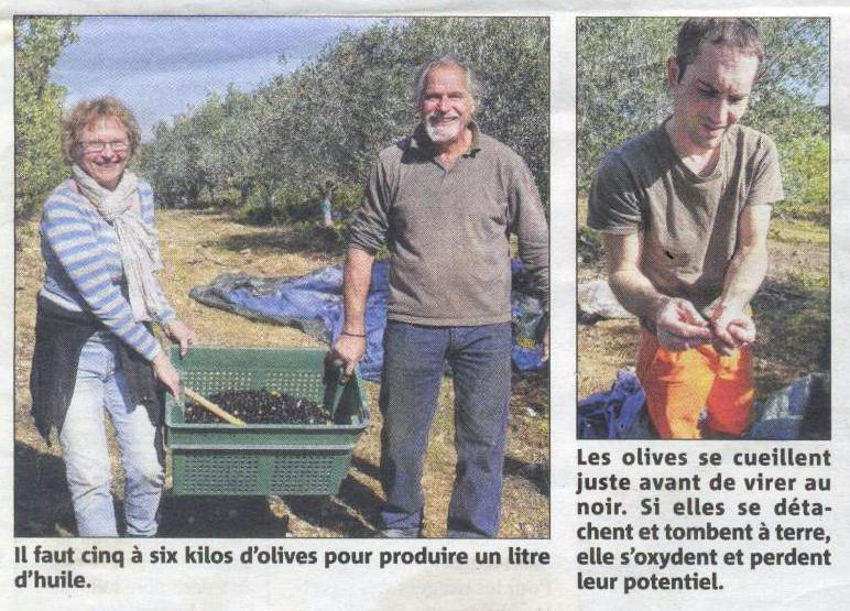 article VM Olives 15 - 4