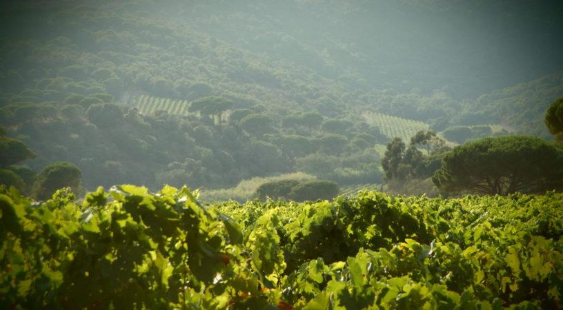 Domaine La Tourraque - Nos vignes