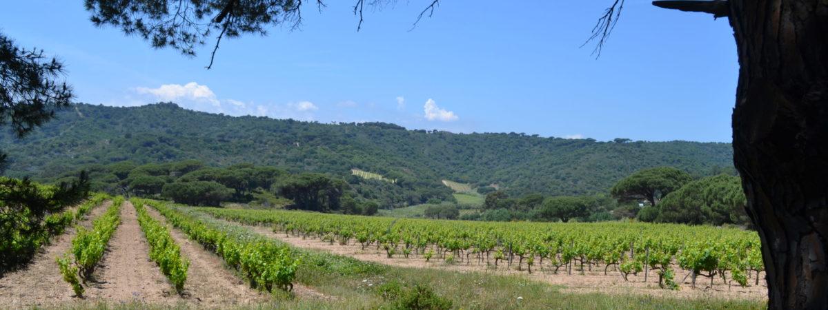 Le domaine ou les vignes